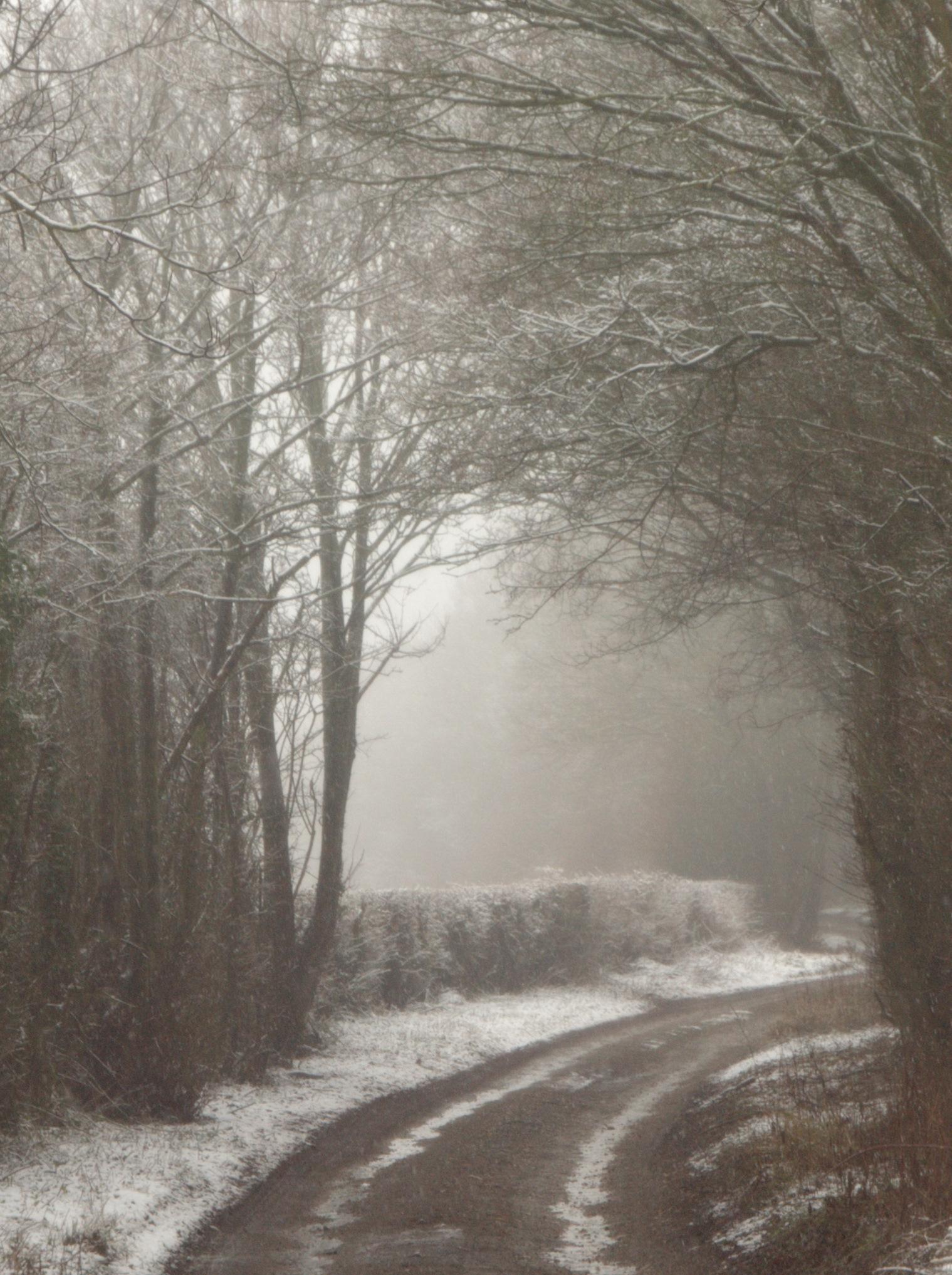 Snowfalling Walk