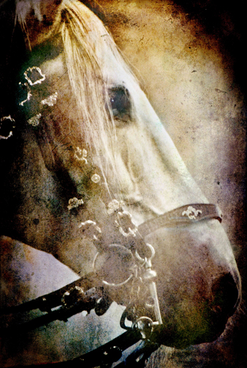 The Silver Bridle