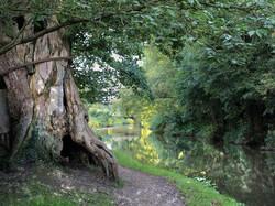The Bound Oak, River Wey, Surrey