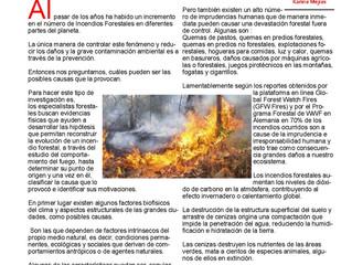 Como Afectan Los Incendios Forestales Nuestro Ecosistema