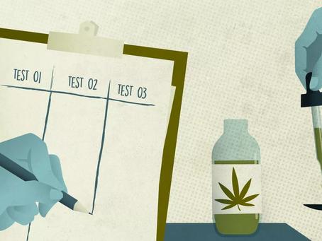 L'expérimentation du cannabis médical débute aujourd'hui en France !