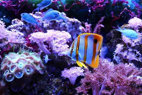 butterfly-fish-3454404_640.jpg