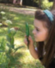 Montessori butterfly.jpg