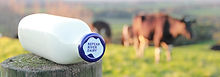Nepean River Dairy.jpg