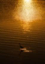 夕日と白鷺 九州 出張撮影 福岡 カメラマン 福岡  九州 カメラマン  フォトグラファー