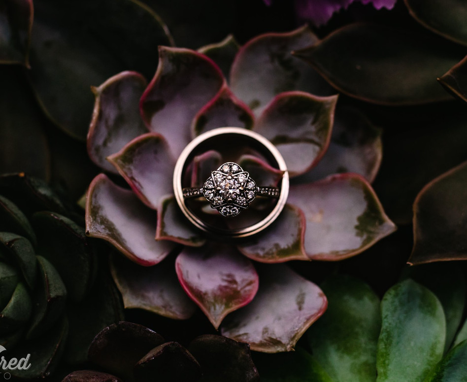 Detail Shot of engagement ring and wedding bands placed on top of succulents
