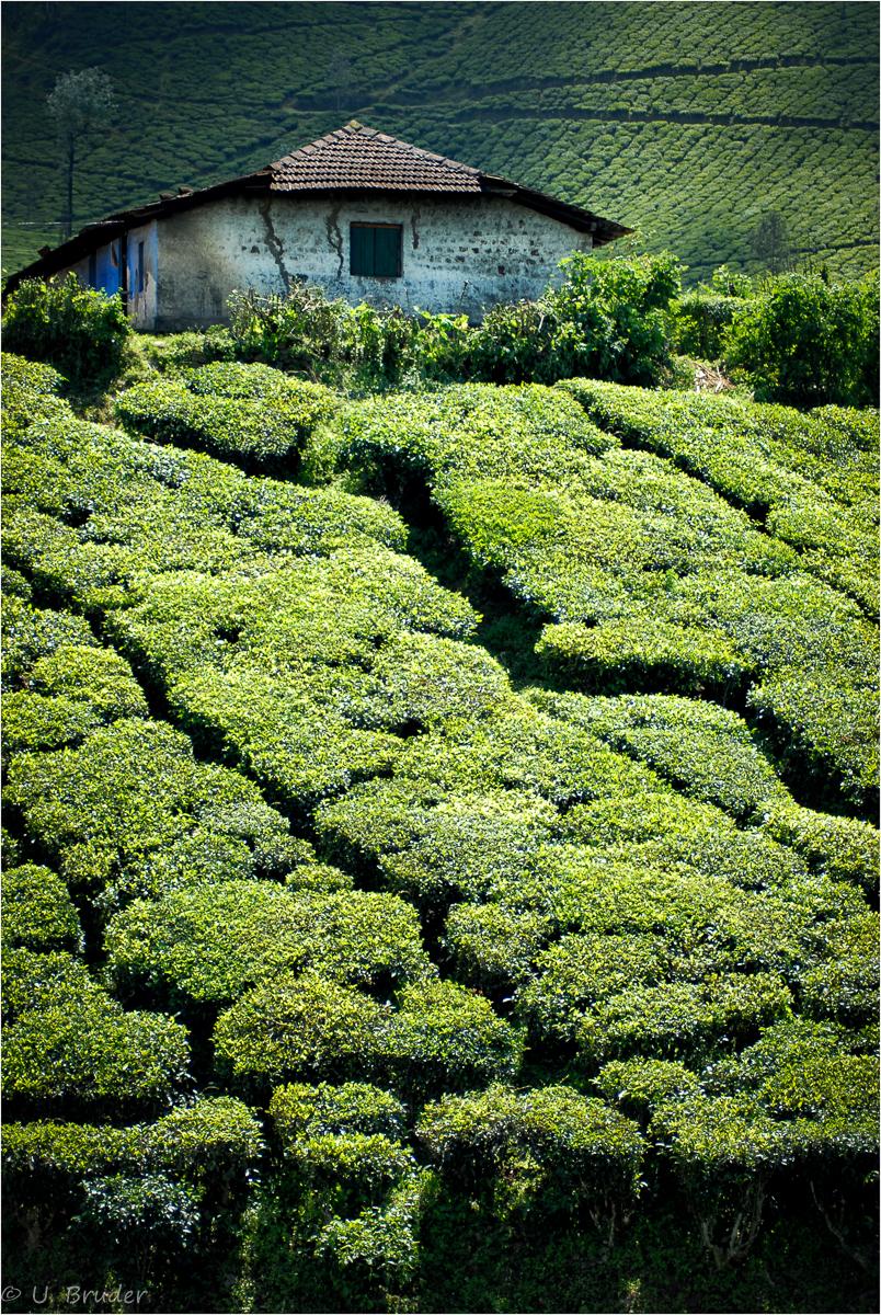 Tealand