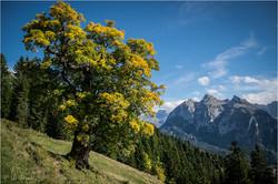 Swiss Autumn III