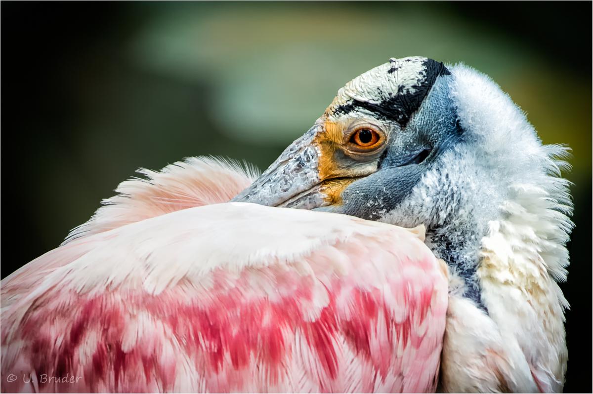 funky bird