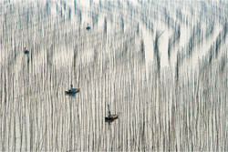 Patterns of Fujian 1