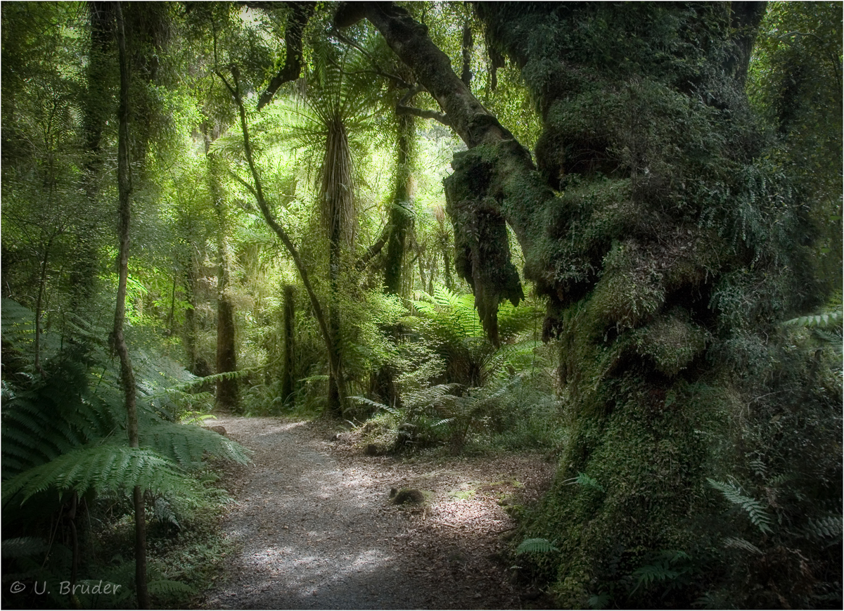 Zauberwald / NZ jungle path