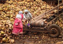 Kokosnuss Verarbeitung