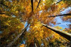 Autumn above