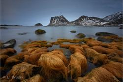 Lofoten winter colours 5