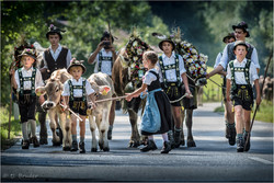 Viehscheid cattle drive III