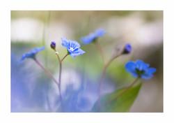zartes Blau / tender blue