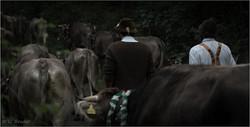 Bavarian herdsmen II