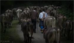 Bavarian herdsmen I