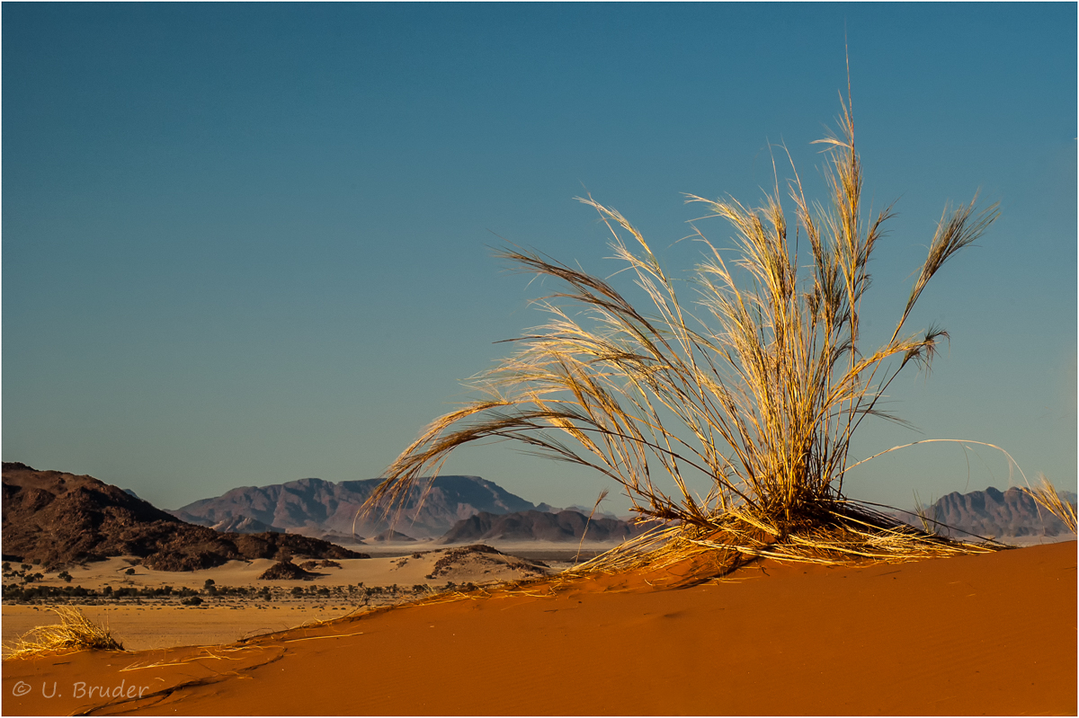 Wüstengras / colours of Namibia