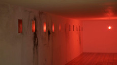 Eva Lis, Secret Life of Trees, Instalacja (fragment), Galeria ON, Poznań listopad 2011