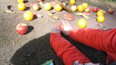 Mandala dla Dulcynei, Działania w Parku Angielskim, Monachium październik 2005