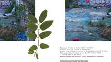 Publikacja Drzewa Państwowe/ Communal Trees, prezentacja w Galerii ON, Poznań listopad 2011