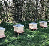 Beehives funded by Orchard CE at Brogdal