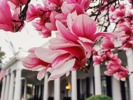 Spring at 530 S. Milledge!