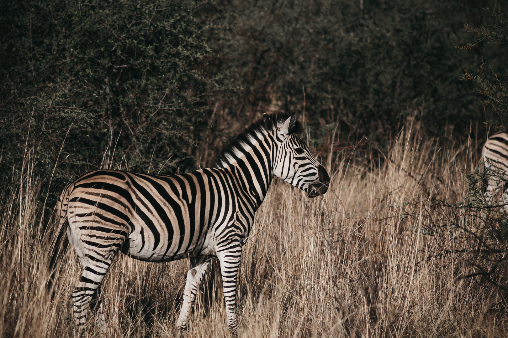 Pilanesberg | South Africa
