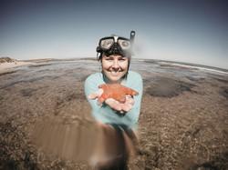 Starfish | Western Australia