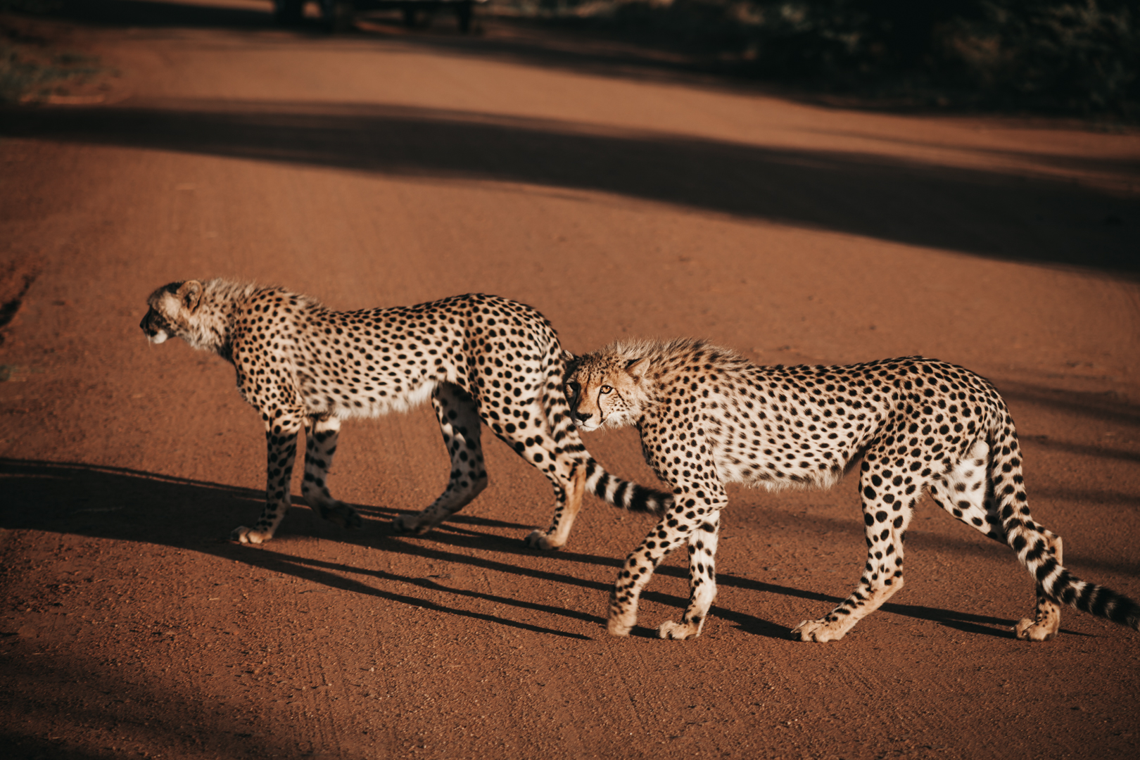 Travel_Images-130