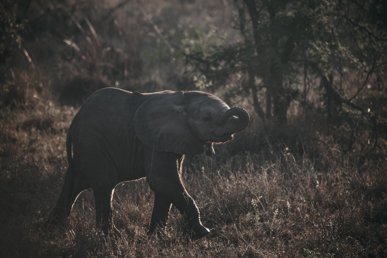 Eelephant | South Africa