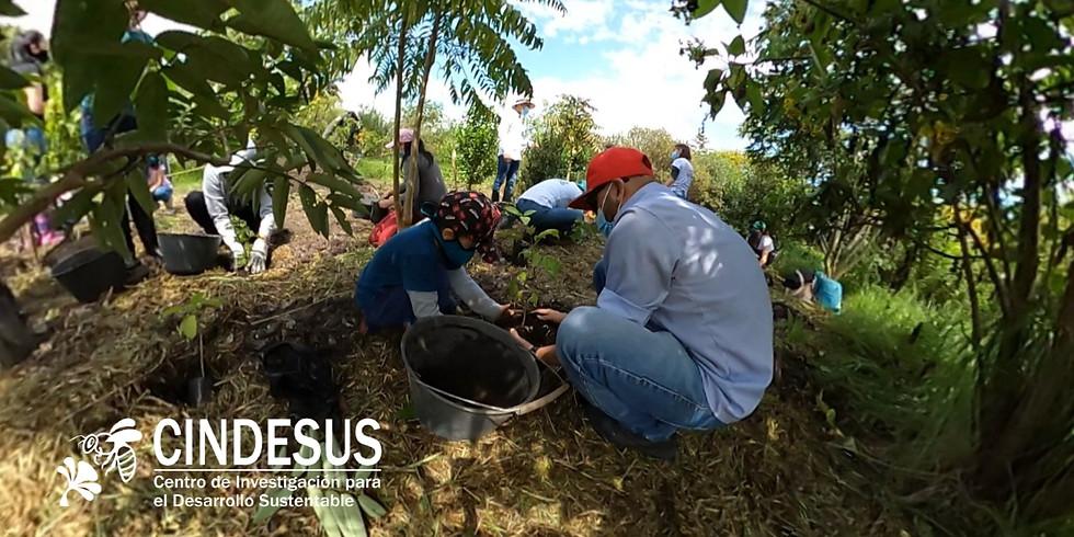 Jornada de reforestación Voluntariado Cindesus