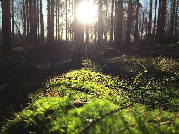 forest-1149876_960_720.jpg