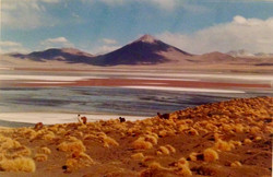 Bolivie - Laguna Colorada