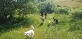 Hiking with dogs in Transylvania