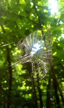 Spider in Romania