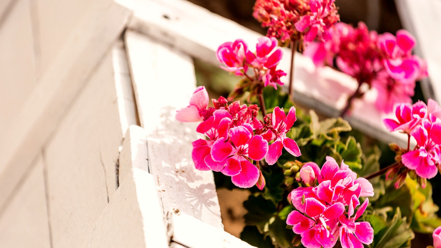 Decoración Floral exterior
