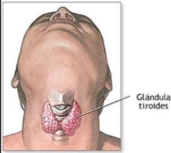 GlandulaTiroides