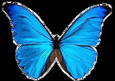 butterflytransprent.png