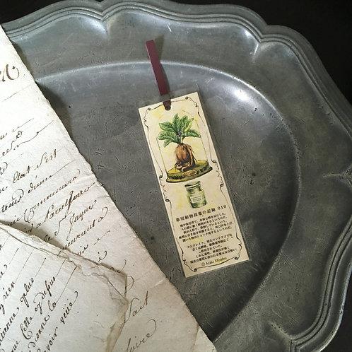 しおり 薬用植物採集の記録010