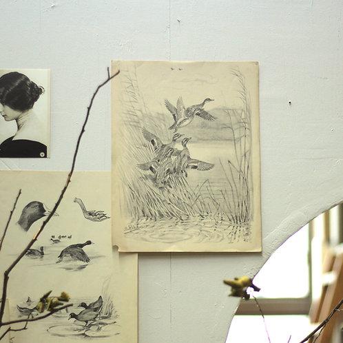 20世紀初期 B.リアブによる鳥の銅版画10枚