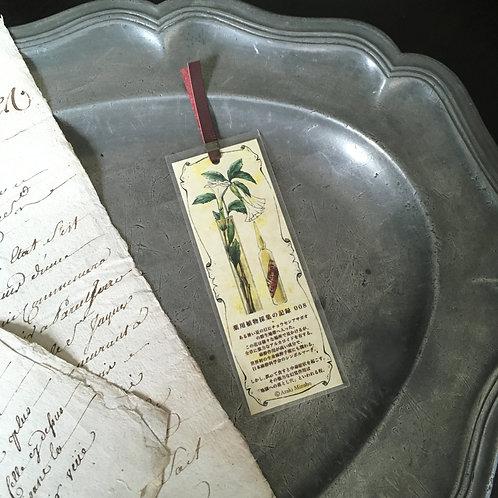 しおり 薬用植物採集の記録008