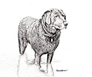 Dog052.jpg