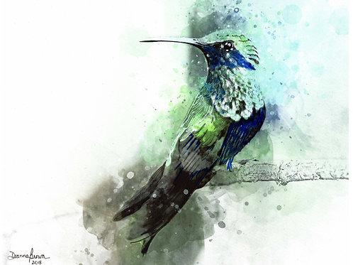 Hummingbird (Original)