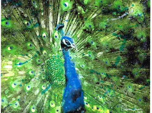 Peacock (Limited Edition)