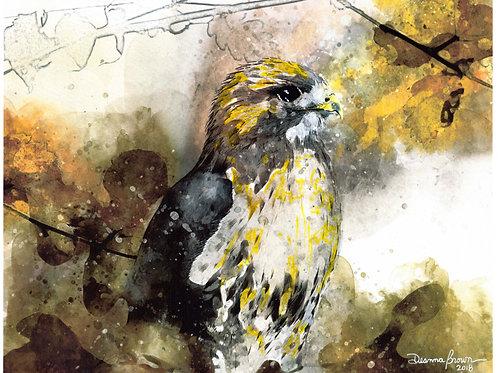 Hawk (Original)