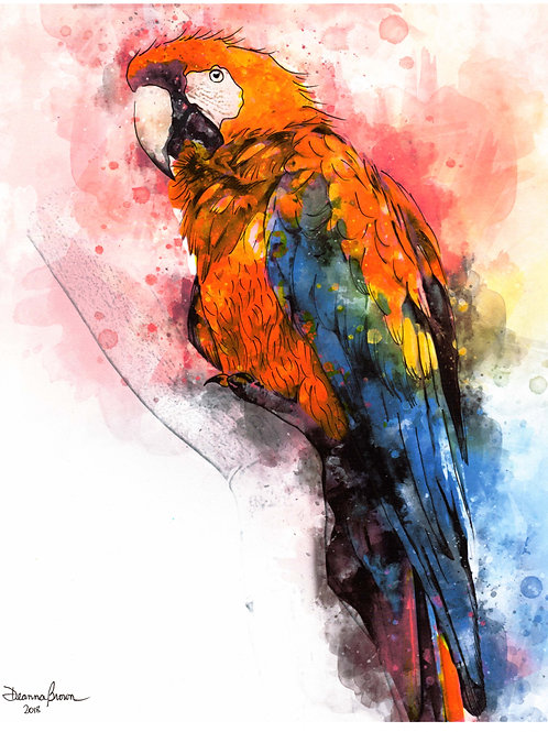 Parrot (Limited Edition)