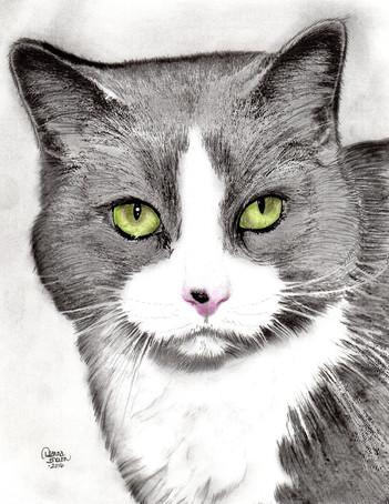 Kayla Cat LR.jpg