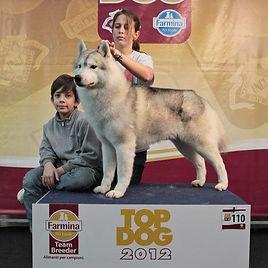 TOP DOG Aren.jpg